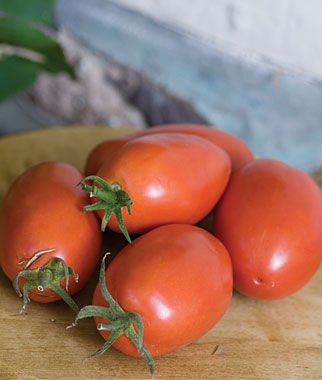 Amish tomatoes in container