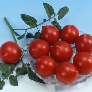 jolly tomatoes