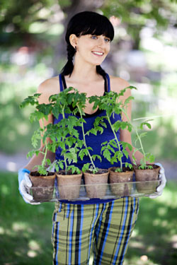 Girl holding tray of tomato plants