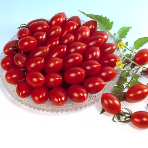 sugary tomatoes