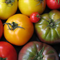 Tomato Varieties