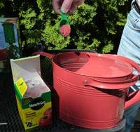 Add dry Miracle Grow Tomato plant food