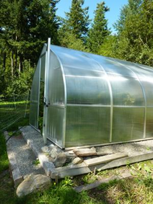 The greenhouse with 8 tomato plants