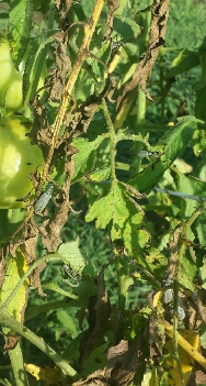 Several Beetles on one plant
